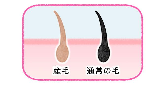 産毛と通常の毛の違い